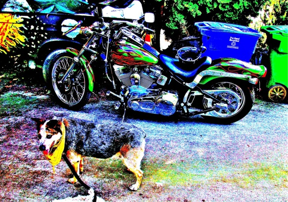 Buddy & Harley