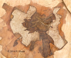 wood states